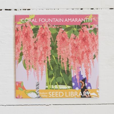 Coral Fountain Amaranth Seeds