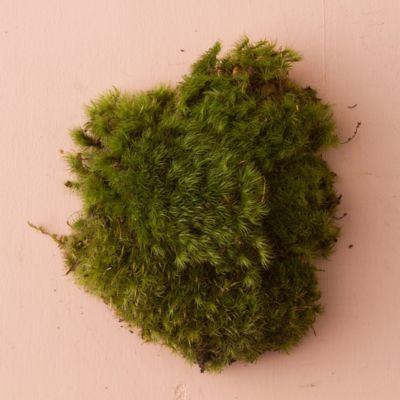 Fresh Clump Moss