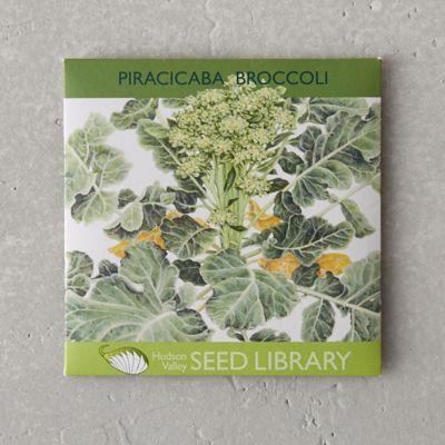 Piracicaba Broccoli Seeds