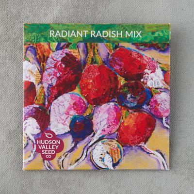 Radiant Radish Blend Seeds
