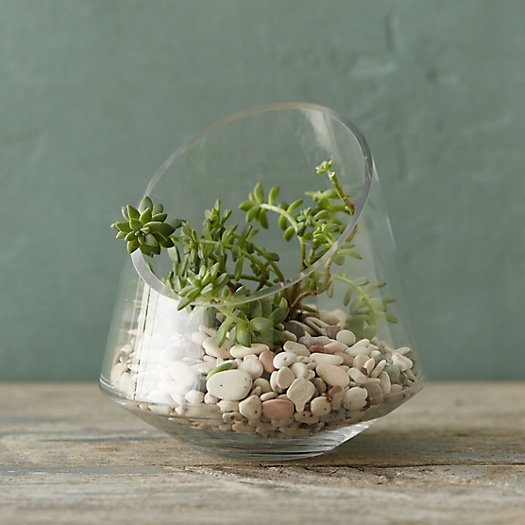 View larger image of Angled Spotlight Terrarium