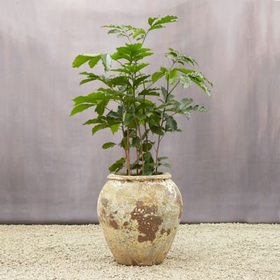 Barnacle Water Jar Planter