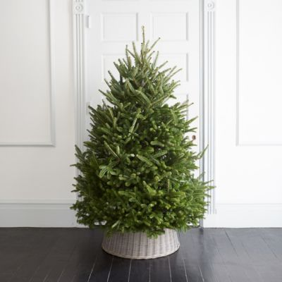 Fresh Cut Fraser Fir