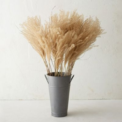 Dried Miscanthus Plume Bunch