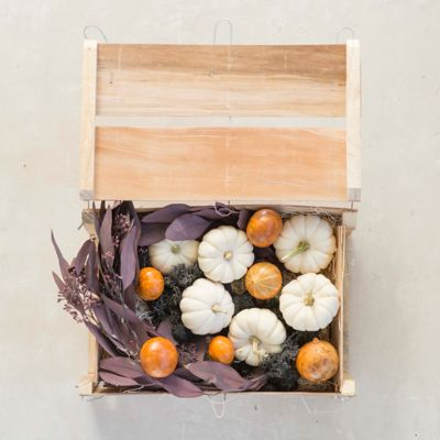 Moonlight Pumpkin & Gourd Crate