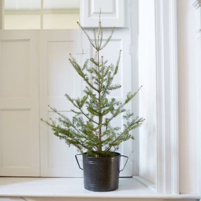 Tabletop Balsam Fir