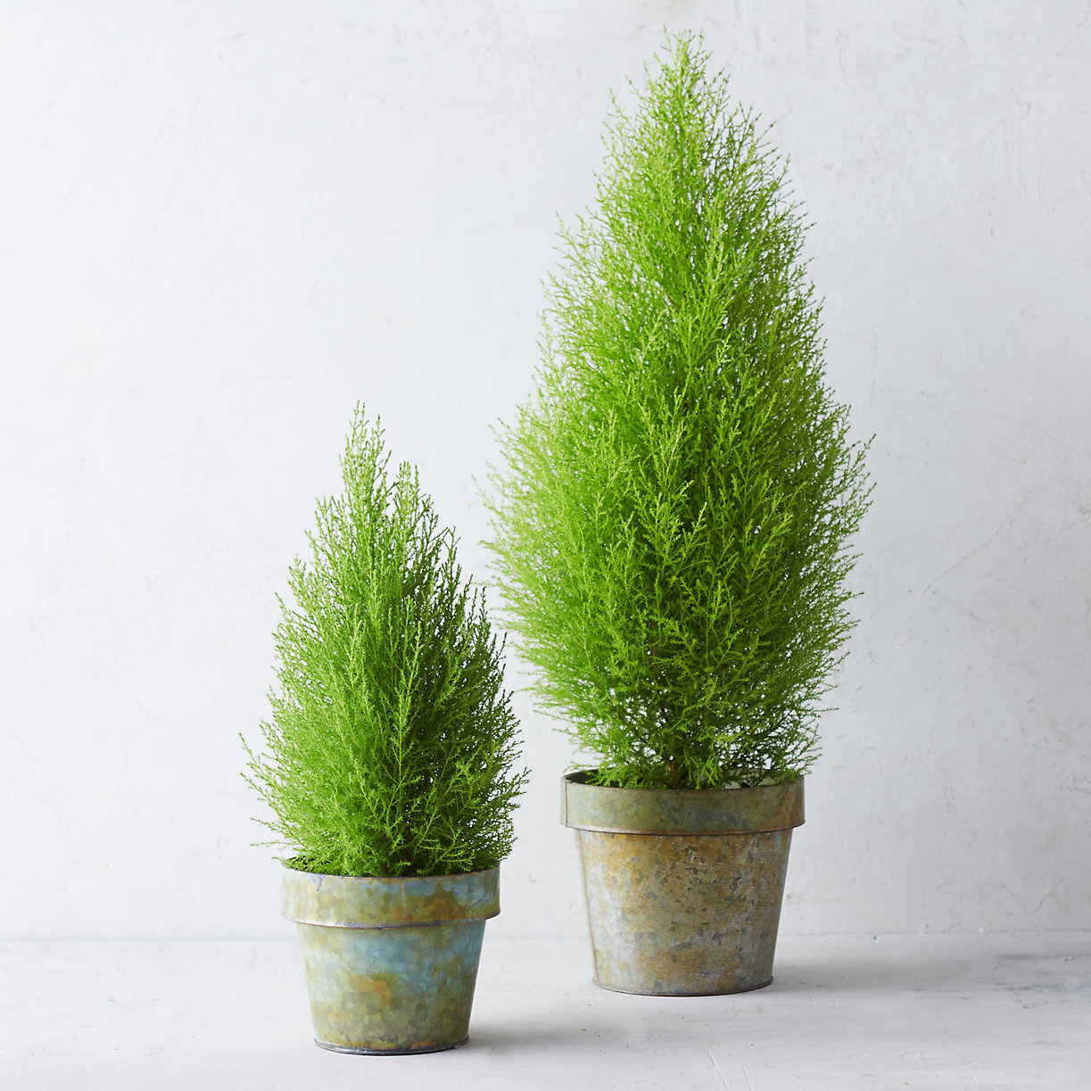 home decorators collection cypress lemon cypress cone topiary terrain 11421