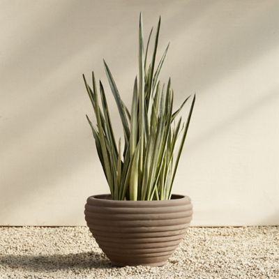 Bergs Banded Bowl Planter