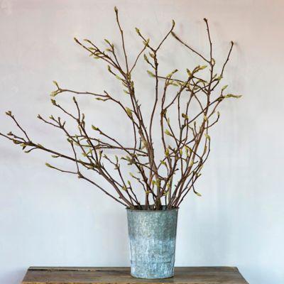 Fresh Magnolia Tip Bunch