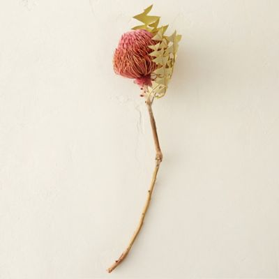 Dried Banksia Stem