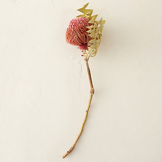 View larger image of Dried Banksia Stem