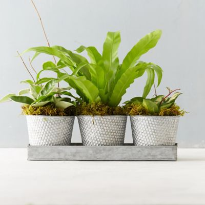 Dotted Pot Foliage Trio