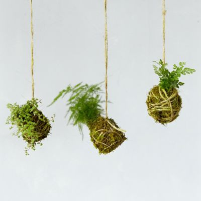 Miniature String Garden Trio