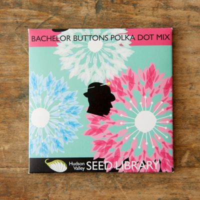 Bachelor Button Polka Dot Mix Seeds
