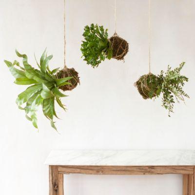 Hanging Fern String Garden Trio
