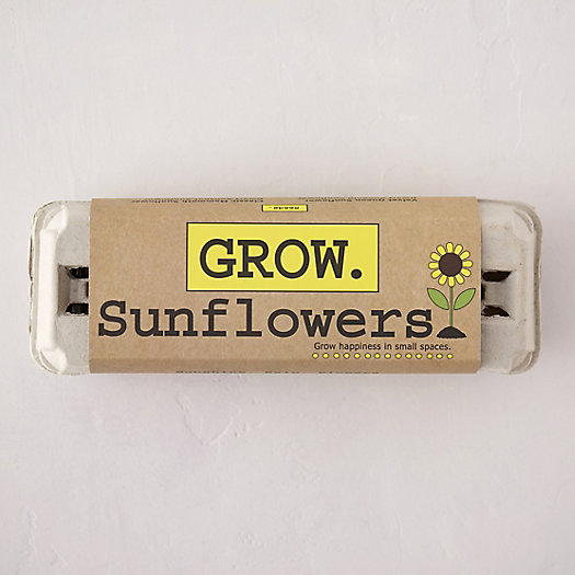 View larger image of Sunflower Grow Kit