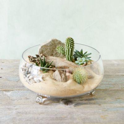 Shallow Footed Bowl Terrarium