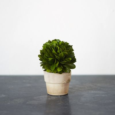 Preserved Boxwood Mini Sphere Topiary