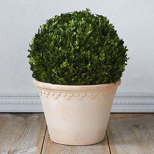 View larger image of Preserved Boxwood Hanging Globe