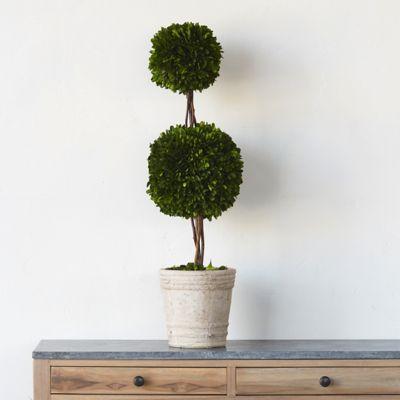 Preserved Boxwood Double Topiary, Medium