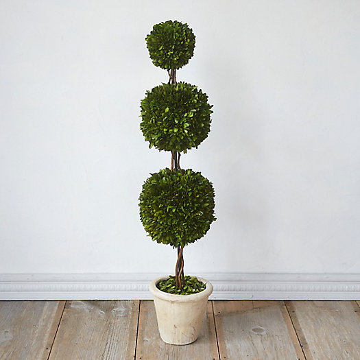 View larger image of Preserved Boxwood Triple Topiary