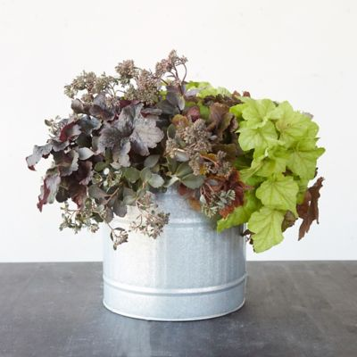 Zinc Wire Handle Bowl Planter