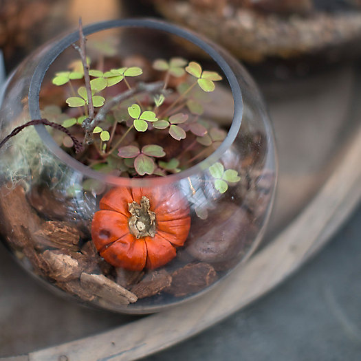 View larger image of Harvest Terrariums