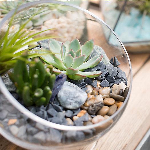 View larger image of Succulent Terrariums
