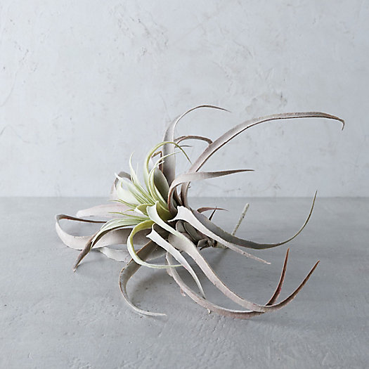 View larger image of Faux Tillandsia, Large