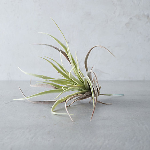 View larger image of Faux Tillandsia, Small