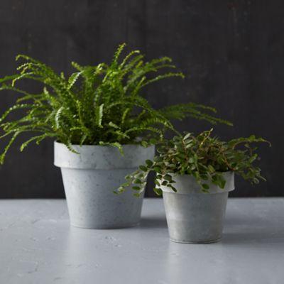 Verdigris Flower Pot