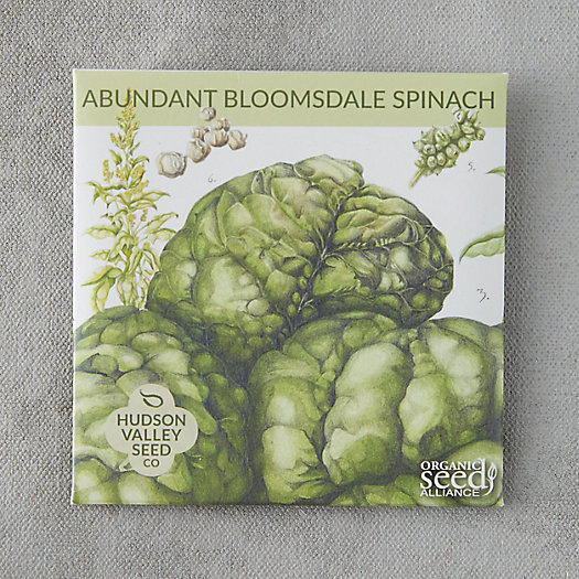 View larger image of Abundant Bloomsdale Spinach Seeds
