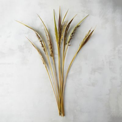Dried Bahia Grass Bunch
