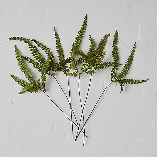 View larger image of Preserved Fern Bunch