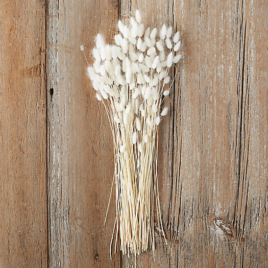View larger image of Dried Lagurus Bunch