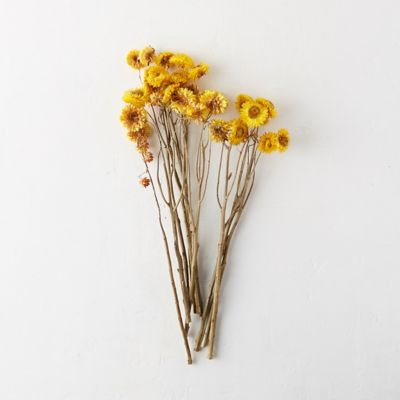 Dried Strawflower Bunch