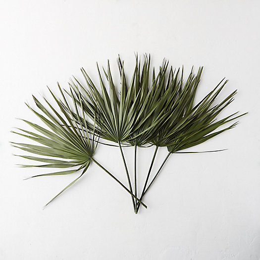 View larger image of Preserved Palmetto Frond Bunch