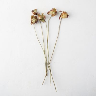 Preserved Sarracenia Flower Bunch