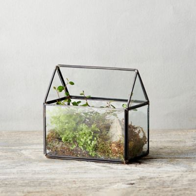 Framed Greenhouse Terrarium