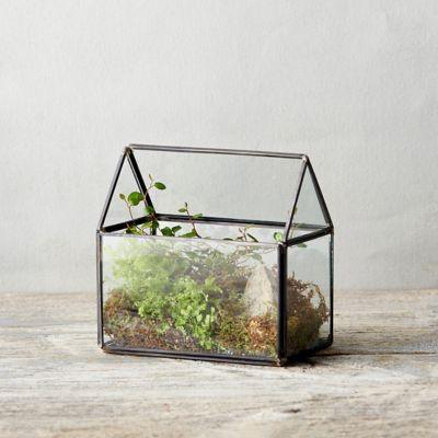Framed Greenhouse Terrarium