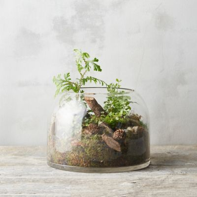Low Dome Terrarium