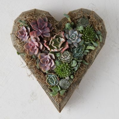Succulent Sweetheart