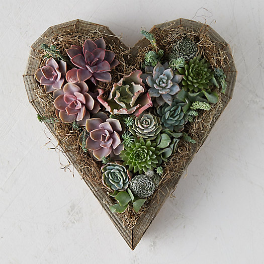 View larger image of Succulent Sweetheart