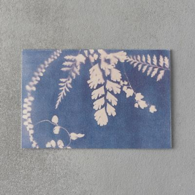 Maiden Fern Card
