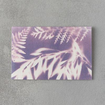 Fern & Olive Card