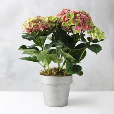 Magic Carousel Hydrangea, Zinc Flower Pot