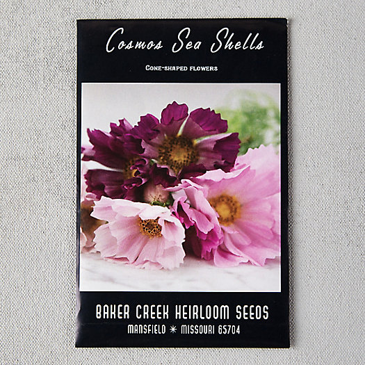 View larger image of Sea Shells Cosmos Seeds