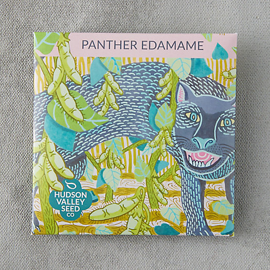 View larger image of Panther Edamame Seeds