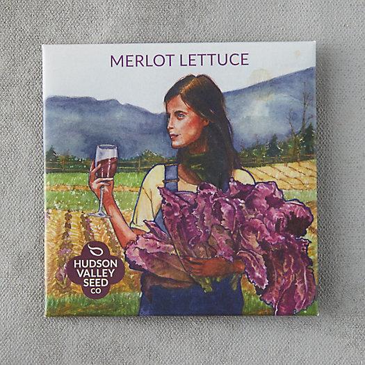 View larger image of Merlot Lettuce Seeds