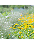 Planting a Meadow Lecture